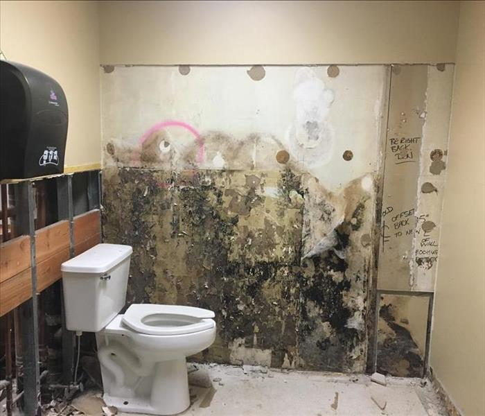 Commercial Mold Cleaning in Lynnwood  Before